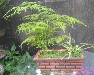 适宜家养的28种植物